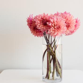 květiny podle feng šuej
